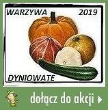 Warzywa dyniowate w naszej kuchni 2019