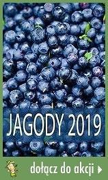 Jagody 2019